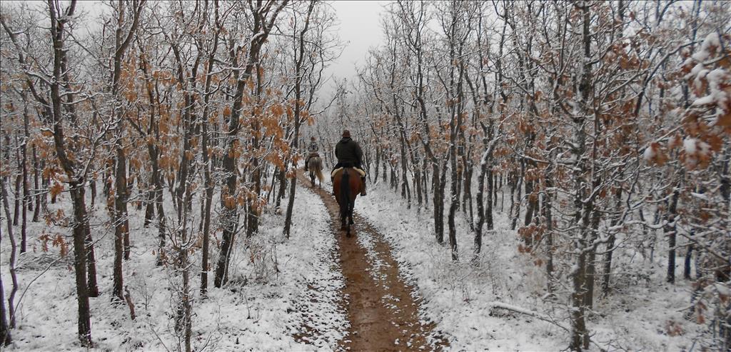 Noticias naturaleza a caballo for Noticias naturaleza
